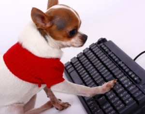 dog typing Stuart Miles